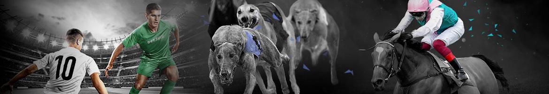 bet365 greyhound and horse racing