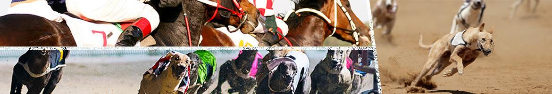 greyhound racing on merrybet